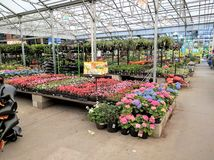 Garden department in a home improvement store Stock Image