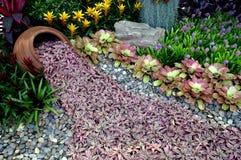 Garden design. Flowers tropcal zone Stock Photo