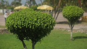 Garden design beautiful trees. At sunny day stock video footage