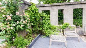 Garden design with concrete wall. With windows, lounge set and oink roses royalty free stock images