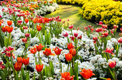 Garden design Royalty Free Stock Photos