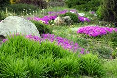 Garden Design with Rocks and Flowers (5). Garden Ornamental Design with Rocks and Blooming Flowers Stock Photo