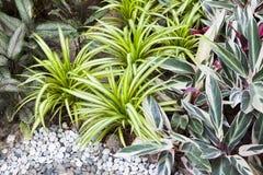 Garden details Stock Photo