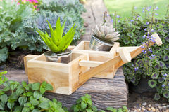 Garden details,small plant Stock Photos