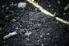 Garden Dirt and Debris Stock Photography