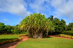 Garden of Dole Plantation. Trees in the garden of Dole Plantation royalty free stock photography