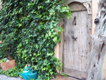 Garden Door with Water Pot, Wood and plant wall royalty free stock image