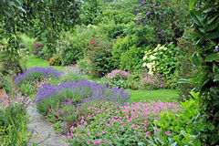 Garden of eden. Photo of beautiful landscaped kent garden with path winding through border plants Stock Image