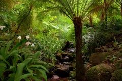 Garden of eden. Garden located in Sintra, Portugal Stock Images
