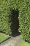 Garden Entrance. A doorway cut into a Yew hedge leading into a garden Stock Images