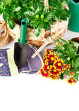 Garden equipment with green plants Stock Photo