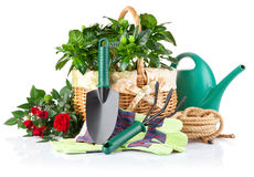 Garden equipment with green plants Royalty Free Stock Photo