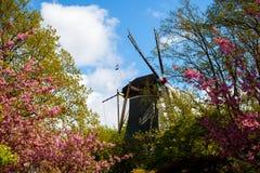 Garden of Europe. Spring in park, Keukenhof, Garden of Europe Stock Photos