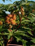 Garden exotic plant background. Garden exotic plants backgrounds against blue sky Stock Images