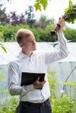 Garden expert checking beetroot condition Royalty Free Stock Photos