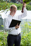 Garden expert controlling beet condition Royalty Free Stock Photos