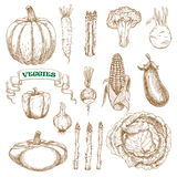 Garden and farm vegetables sketches set Royalty Free Stock Images