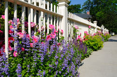 Garden fence. White garden fence with pink roses and purple lupines Royalty Free Stock Images