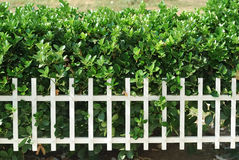 Garden fence Stock Image