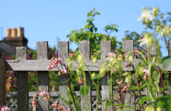 Garden fence. A view looking across and over a wooden garden fence in an urban garden setting. Pink and green foliage to foreground and the chimneys of town Royalty Free Stock Photo