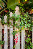Garden fence with climbing growth Stock Photography