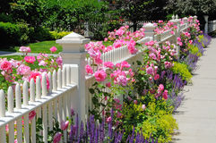 Garden fence with pink roses. Garden fence with climbing pink roses, sage, speedwell and catmint in the garden. Pink, blue, purple, green, colorful. Beautiful Stock Photo