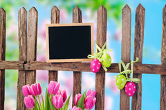 Garden fence and tulips Royalty Free Stock Photo