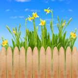 Garden fence wooden spring blooming flowers. Sky stock photo