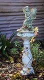 Garden Fery Royalty Free Stock Image
