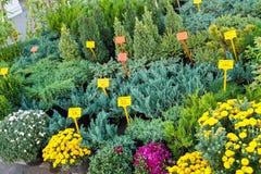 Garden festival. Royalty Free Stock Photo