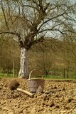 Garden with field. Creel and hoes laying in garden on the topsoil Stock Photography