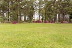 Garden Field. Open field with surrounding pine trees and azaleas Stock Photos
