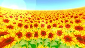 Garden filled with sunflowers. Sunflower field landscape on summer sunny day. Loop animation. stock video footage