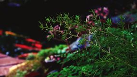 Garden with fish colorful plants stock video footage