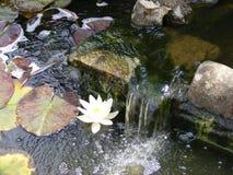 Garden fish pond and water lilies. Garden fish pond, waterfall and pond lilies royalty free stock photos