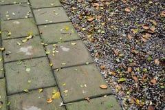 Garden floor. Cement and stone floor in garden Royalty Free Stock Photography
