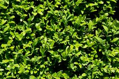 Garden flora close-up Stock Images