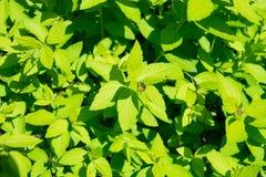 Garden flora close-up Royalty Free Stock Photos