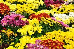 Garden floral. Various flowers in botanical garden Stock Photography
