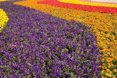 Garden flower Royalty Free Stock Photos