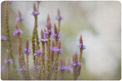 Garden Flower Background Stock Photo