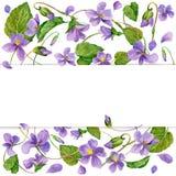 Garden Flower background. watercolor Stock Photos