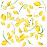 Garden Flower background. watercolor Stock Image