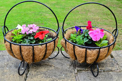 Garden flower baskets Stock Image