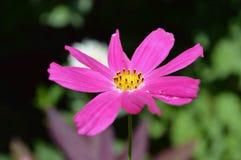 Garden flower. Beautiful garden flower Stock Image