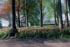 Garden with flower beds and bright colors. Royalty Free Stock Photography