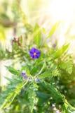 Garden flower blur stock image