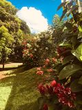Garden flower bushes on a sunny day. Bushes of flowers, trees and beautiful royalty free stock photography