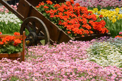 Garden with flower carriage Stock Images