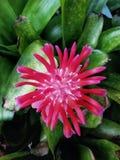 Garden flower. Red, beautiful, summer royalty free stock photo
